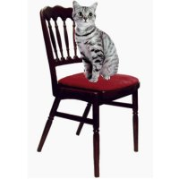 This is a cat. The cat is on the chair. My cat is on the chair. - Tai yra katė. Katė yra ant kėdės. Mano katė yra ant kėdės.