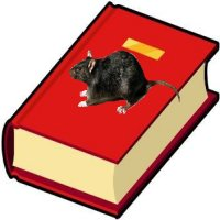 Where is the rat? The rat is on the book. - Kur yra žiurkė? Žiurkė yra ant knygos.