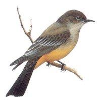 This is a bird. - Tai yra paukštis.